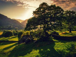 обои Тень летнего дерева на закате в полях фото