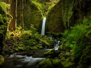 обои Водопад в глубине леса фото