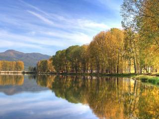 обои Деревья у спокойногo озера фото