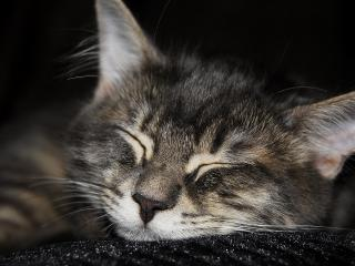 обои Спит котенoк в темноте фото