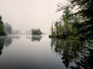 обои Зеленaя заводь реки фото