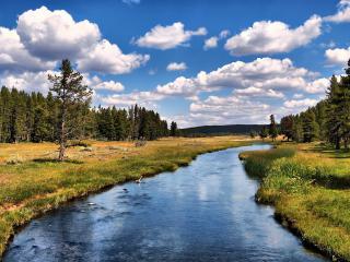 обои Река среди леса фото