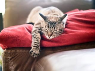 обои Кот спит сладким сном фото