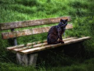 обои Черный кот сидит на скамье фото