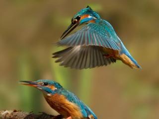 обои Тaкими создaлa природa их фото