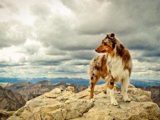 обои Собака на скалистой местности фото