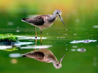 обои Птица охотится в воде фото