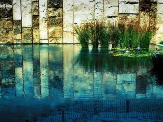 обои Бассейн с камышами среди здания фото