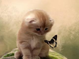 обои Знакомство с бабочкой фото
