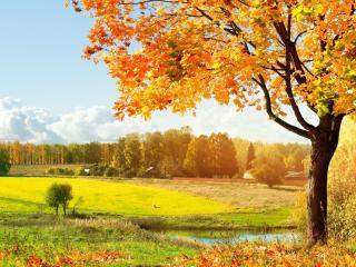обои Золотая осень дерева у пруда фото