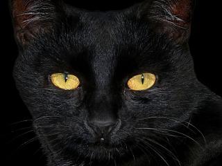 обои Черная кошка в темной комнате фото