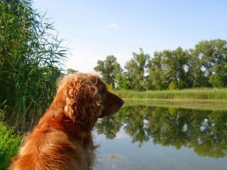 обои Пес сидит на берегу реки фото