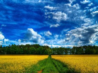 обои Дорого через поле в лес фото