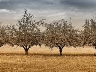 обои Весенние деревья в поле фото