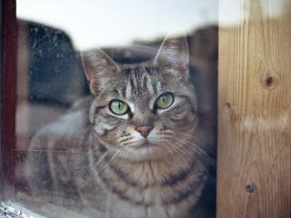 обои Кот смотрит сквозь окно фото