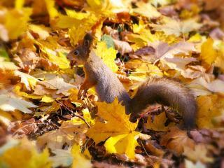 обои Осенний рыжик фото