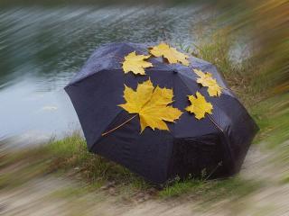 обои Осенний хоровод фото