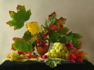 обои Натюрморт - Виноградно-рябиновый фото