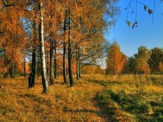обои Золото леса осеннее фото
