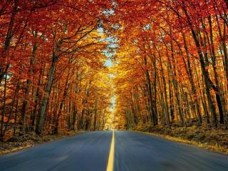 обои Осеннее шоссе фото