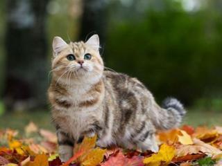 обои Осенняя прогулка фото