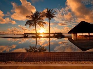 обои Две пальмы на фоне заката фото