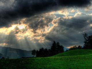 обои Солнечные лучи на фоне леса фото