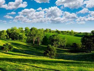 обои Красивый вид зеленых летних деревьев и лужаек фото