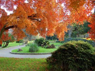 обои Сентябрь в парке фото
