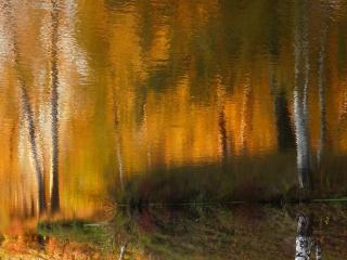 обои Художница - осень фото