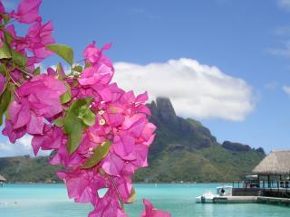 обои Красивая ветка на острове фото