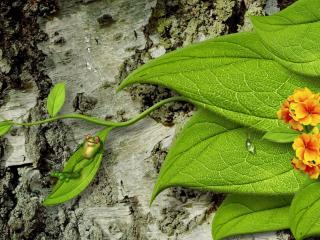 обои Нарисованный лягушонок на стволе березы фото