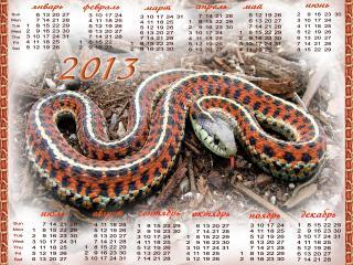 обои Змеинный год фото