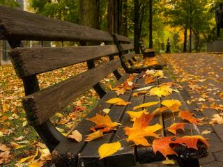 обои Осень в парке фото
