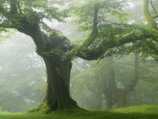 обои Лес ветвистых деревьев в дымке фото