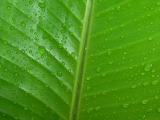 обои Зеленый лист в каплях росы фото