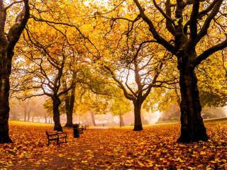 обои Осенний одинокий сквер фото