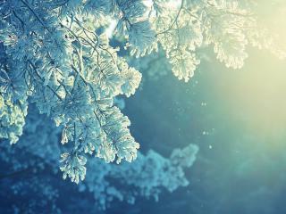 обои Зимние ветви дерева, укутанные снегом фото