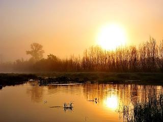 обои Золотое утро, летом на пруду фото