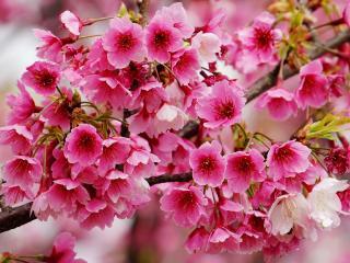 обои Распускающиеся весенние цветы фото