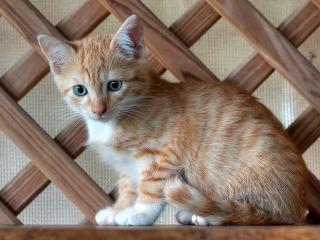 обои Маленыкий рыжий котенок сидит на стуле фото