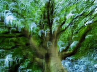 обои Дерево абстракций фото