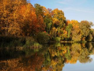 обои Осенние краски пруда фото