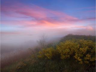 обои Туман розового осеннего утра фото
