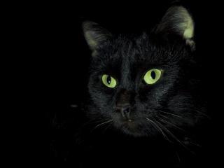 обои Черная кошка в темноте фото