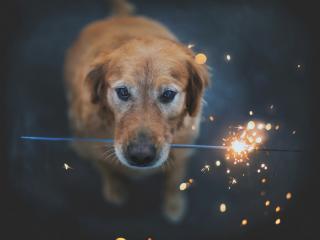 обои Пес с бенгальским огнем фото