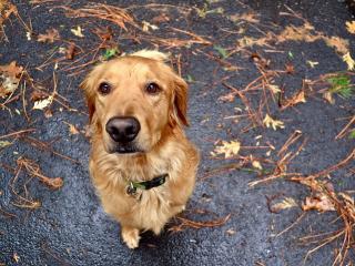 обои Внимательный взгляд пса на асфальте фото