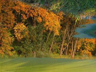 обои Осень в пруду фото