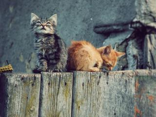 обои Два котенка сидят на бревнах фото