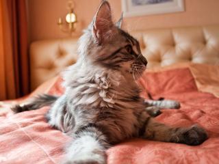обои Пушистый усатый кот фото